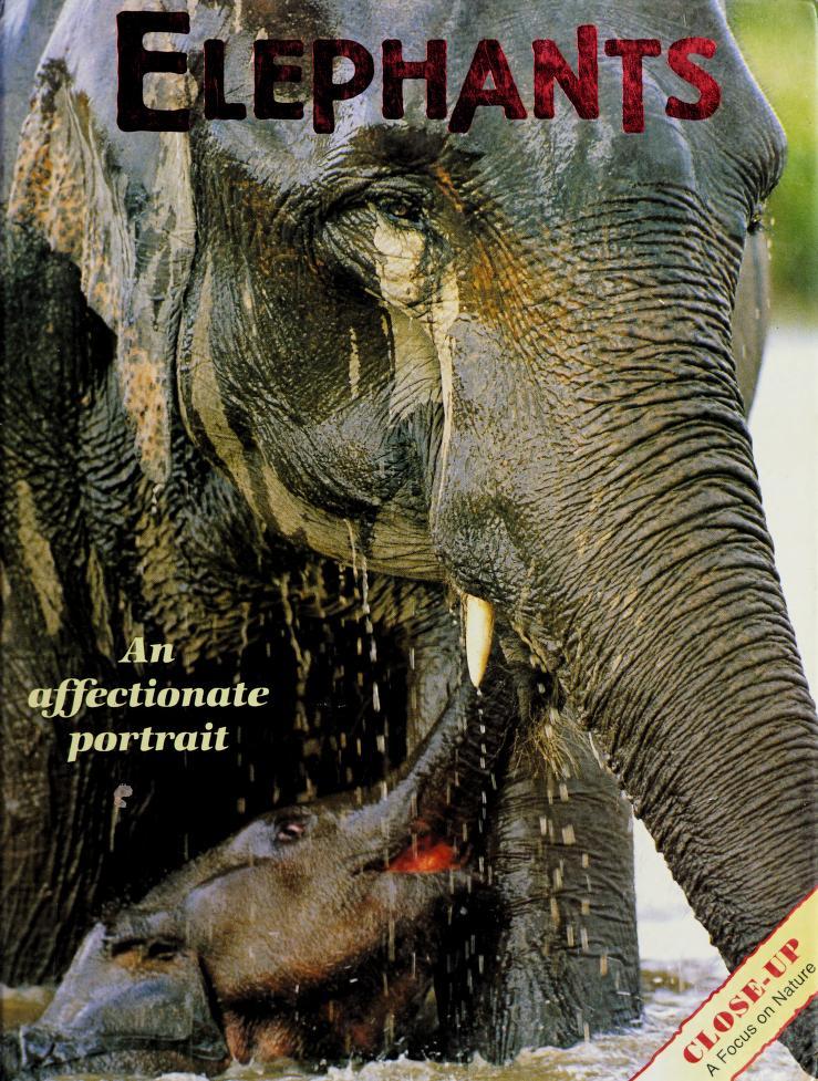 Elephants by Jean Brody